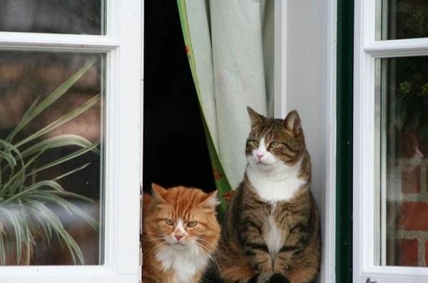 Почему кошки так любят сидеть у окошка