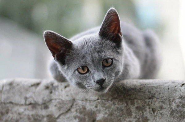 Кошки приходят в нашу жизнь не случайно