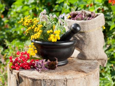 15 растений, их магические свойства