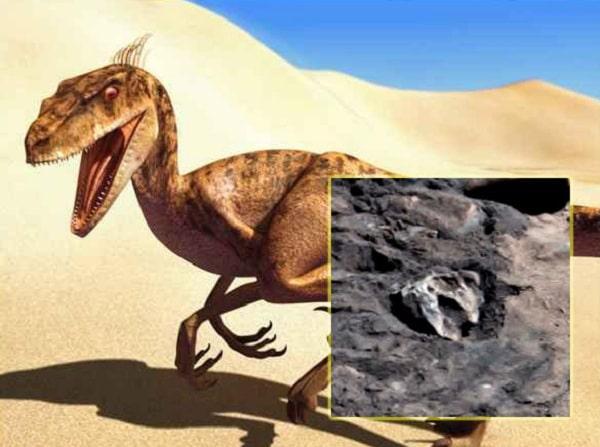 Уфолог разглядел на Марсе «останки крупной рептилии»