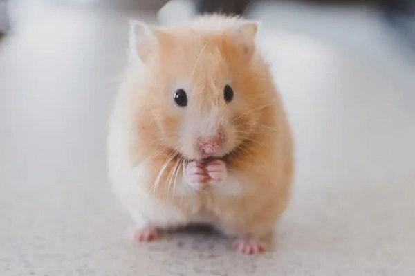 Для чего мыши научились считать