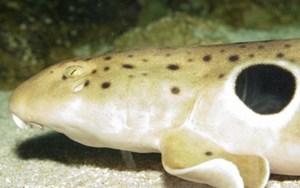 В 2013 году ученые обнаружили 10 видов необычных животных
