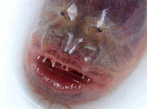 Лицо «чужого» в китайском озере