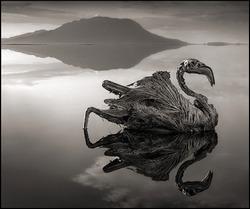 Танзания. Озеро, превращающее животных в статуи