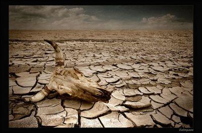 Геопатогенные зоны – гиблые места планеты