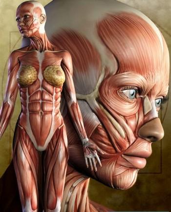 Шрамы эволюции на теле человека