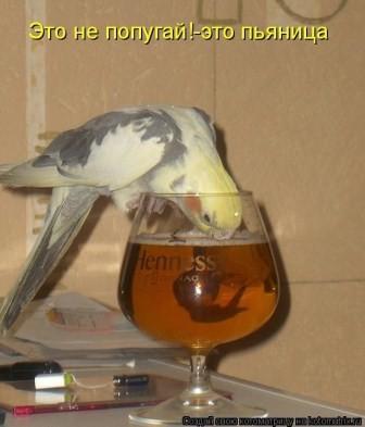 Попугай говорящий, но еще и пьющий