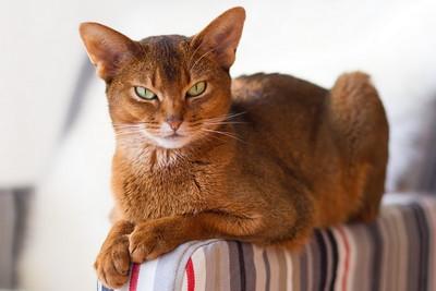 Кошка — одно из самых странных созданий на Земле