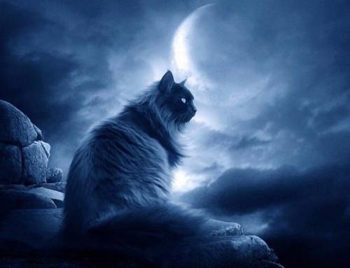 Переселение душ: невыдуманная история про кота