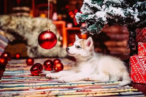 Советы астролога: как встречать 2018 год собаки
