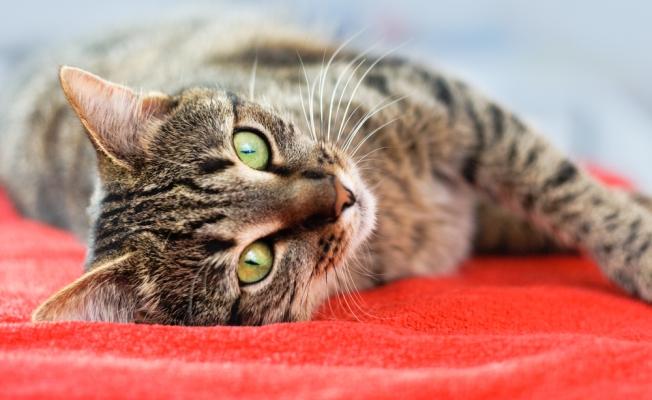 10 фактов про необычные лечебные способности кошек