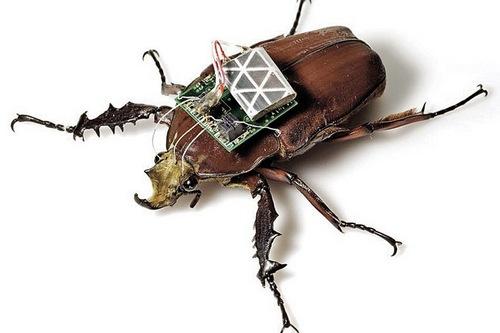 Необычная армия будущего: боевые насекомые и животные