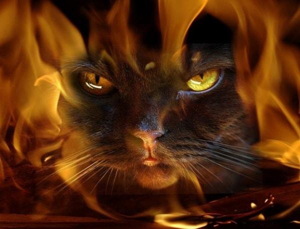 Кошачье проклятие-Никогда не пускай в дом кошек 79040418