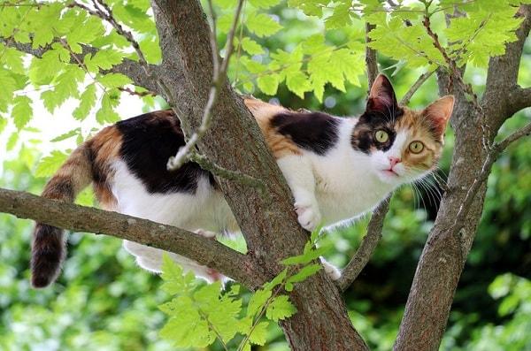 Мистические истории про кошек и их хозяев
