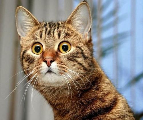 Эти необычные кошки: 6 странных кошачьих привычек