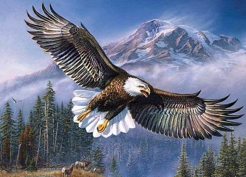 2019: год парящего орла по славянскому календарю
