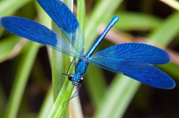 Сказка со смыслом о стрекозе без крыльев