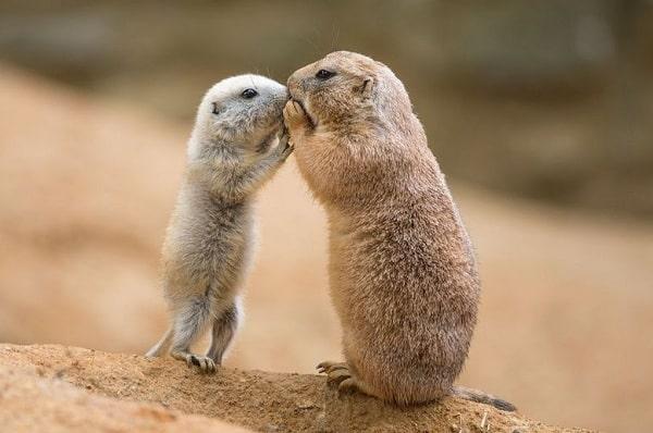 10 удивительных фактов про общение животных