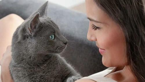 Почему лучше не смотреть в глаза кошке