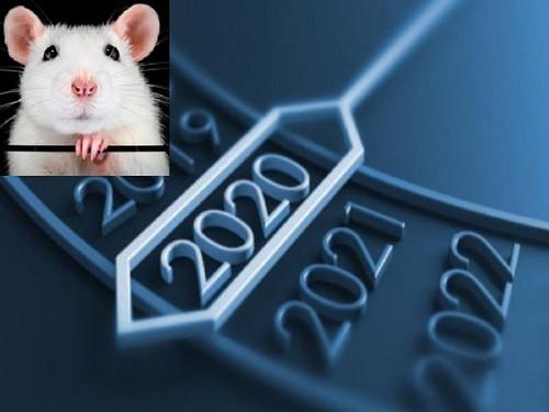 2020 год Белой крысы: каких опасностей ожидать