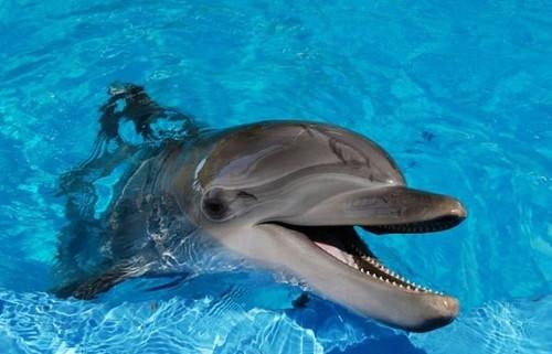 Другое мнение: так ли дружелюбны дельфины