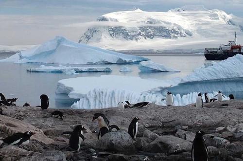 Тайны ископаемого леса Антарктиды