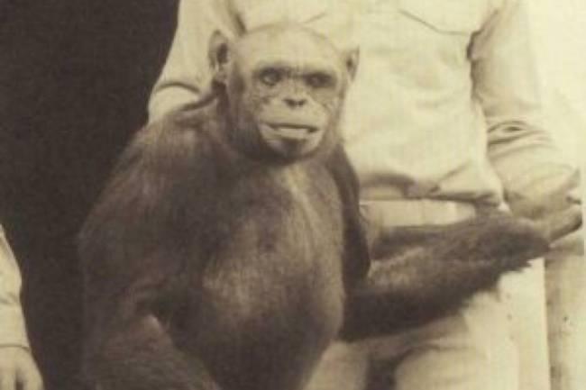 Необычный Оливер – возможно гибрид обезьяны и человека